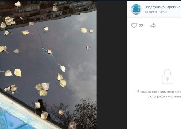 В фонтане на Таллинской завелись рыбы