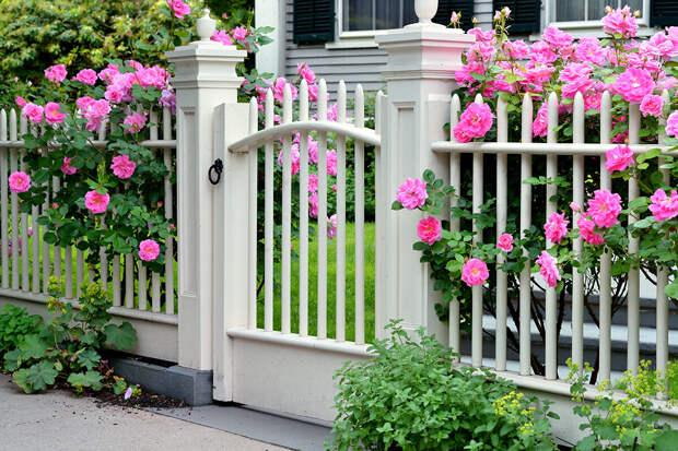 Красивый забор для загородного дома. Идеи и материалы