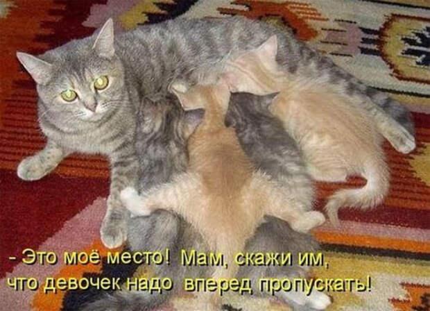 Цитаты от очень умного кота