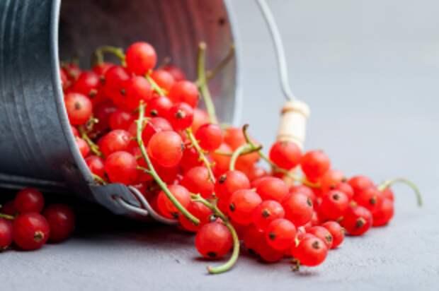 Победить смородину. 8 способов использовать ведро ягод