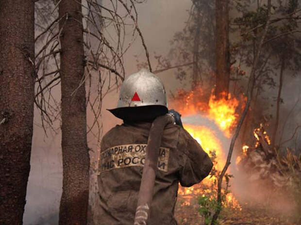 Эксперт выдвинул неожиданную версию причин пожаров в Сибири: продолжить вырубку
