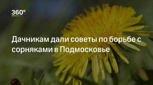 Дачникам дали советы по борьбе с сорняками в Подмосковье