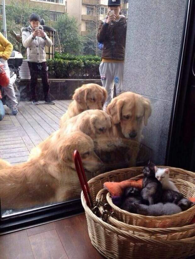 22. Первый раз увидели котят домашние питомцы, забавные животные, кошки забавное, кошки и собаки, морды, реакция, смешные животные, собаки и кошки