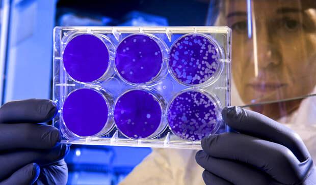 В России за сутки выявили более 8 000 новых случаев коронавируса