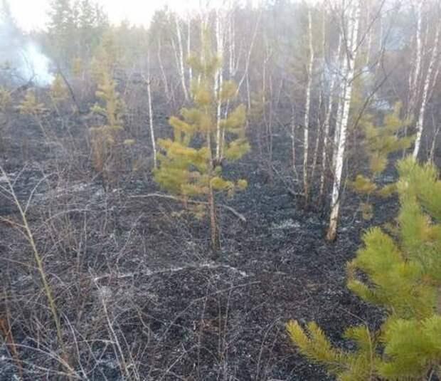 В Бурятии потушили лесной пожар в Тункинском нацпарке