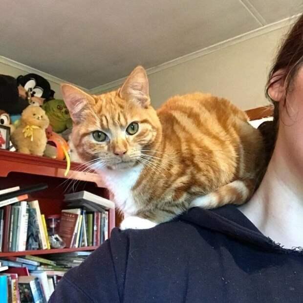 Девушка хорошо кормила котенка, а он не хотел расти. Причина выяснилась спустя 7 месяцев