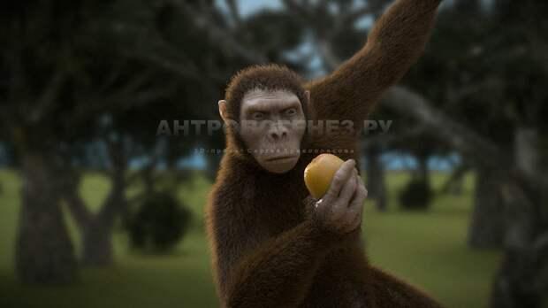 Эволюция от обезьяны к человеку
