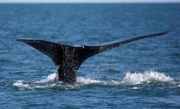 Женщина смотрела с самолета в иллюминатор и далеко внизу увидела огромного кита