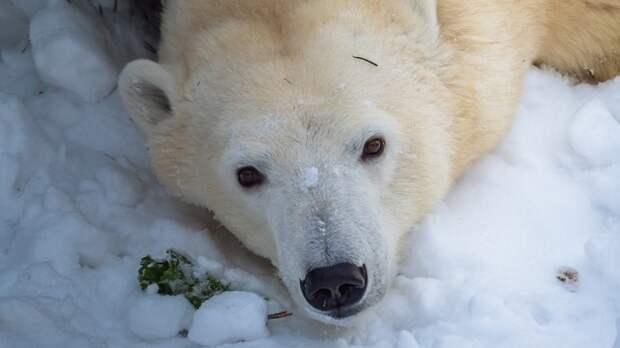 Прокуратура назвала причину гибели белого медведя в зоопарке Екатеринбурга