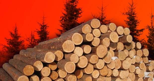 Что случится через 40 лет, если мы не прекратим вырубать леса