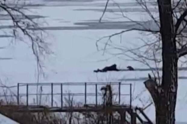 Парень не испугался тонкого льда и спас трех собак от гибели