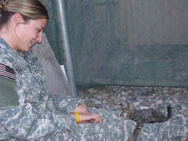 Женщина сразу привязалась к кошке и решила забрать ее в США афганистан, животные, кошка