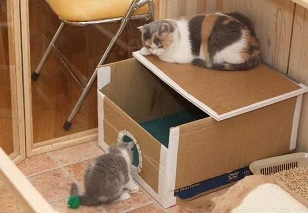 6. Домик для питомца - самое простое, что можно придумать! Коты сами ежедневно подкидывают нам эту идею, залезая в пустые коробки идеи, интересно, мастер на все руки, своими руками, сделай сам, фото