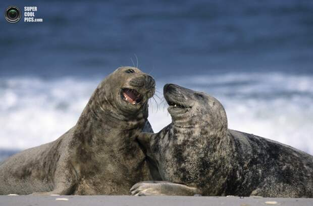 Забавные тюлени
