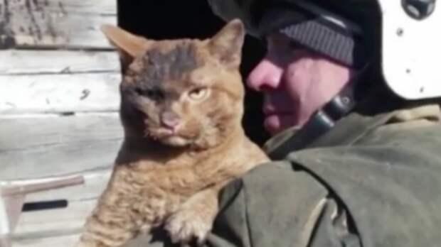 Спасенный при пожаре кот стал мемом