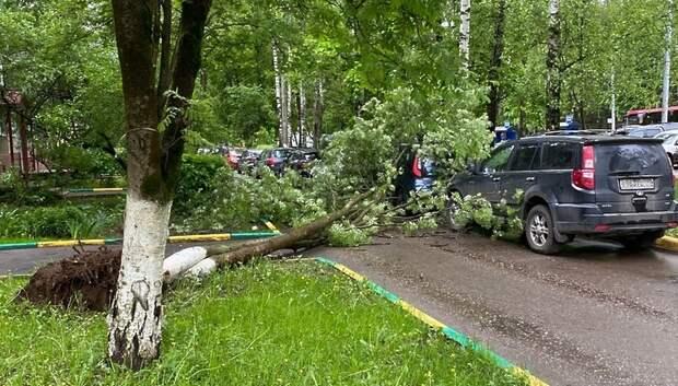 Дерево упало на припаркованную машину в одном из дворов Подольска