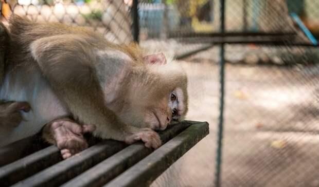 Лена Миро: «Мы все в равной степени виновны в истязании цирковых животных!»
