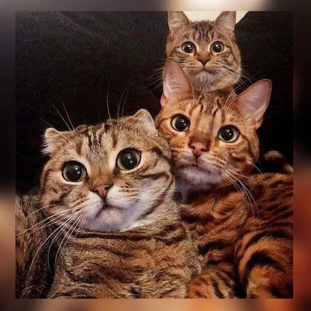 10 фото-доказательств того, что кошачья семья выглядит очень умилительно