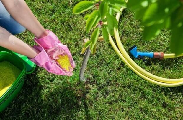удобрение вишни