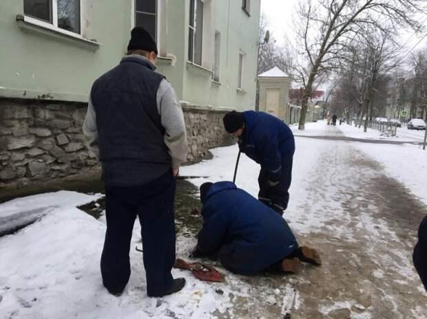 В Кировске всем миром спасали замурованного в асфальте кота