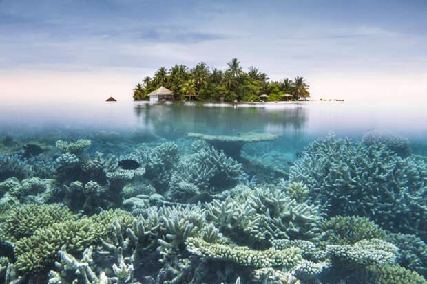 Коралловые рифы могут полностью исчезнуть через 30...