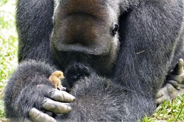Яркие примеры, что животные могут вырастать до размеров, которые мы и не представляем!