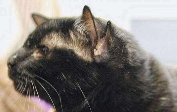 У этого необычного кота 4 уха. Но он наконец-то нашел свой дом!
