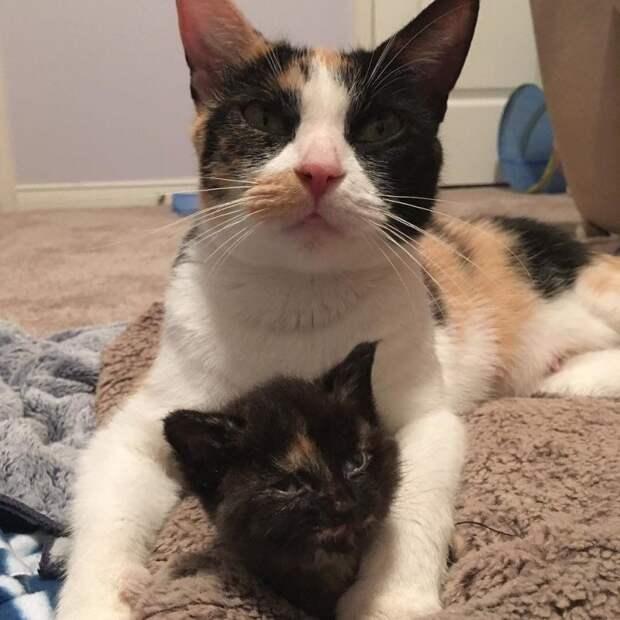 Ветеринары не верили, что эта кроха выживет, но она выросла в чудесную мадам до и после, история, история спасения, коты, котята, кошки, спасение животных