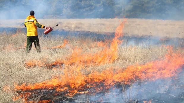 Межрегиональные учения потушению лесных пожаров прошли вРостовской области