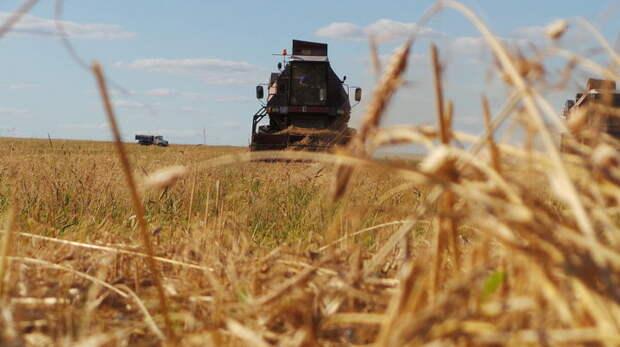 Антироссийские санкции вынудили Латвию покупать больше зерна из РФ