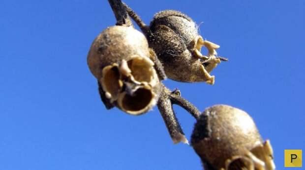 Топ 15: Самые странные растения на Земле (16 фото)