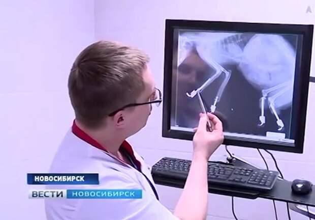 Русский кот Рыжик - первый в мире кот с четырьмя бионическими лапами