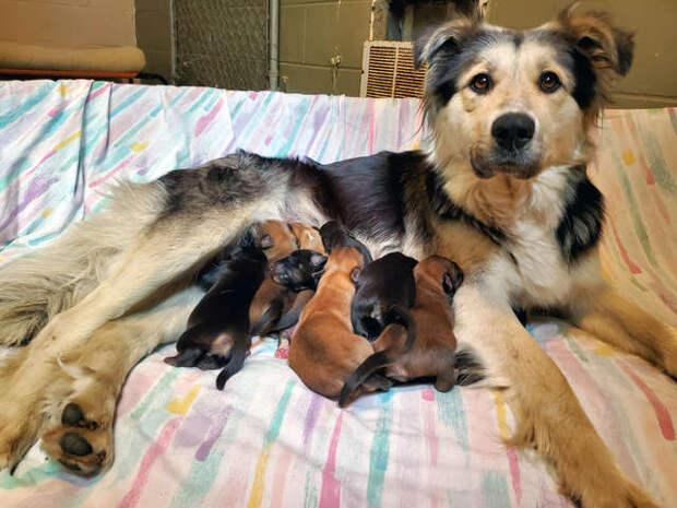 В обмотанной скотчем коробке билась мама-собака с 9 щенятами истории спасения, помощь животным, собака, собаки, спасение животных, щенки