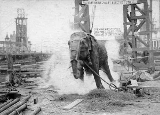 Казнь Топси, которую Эдисон хладнокровно снимал на кинопленку. /Фото:timetoast.com