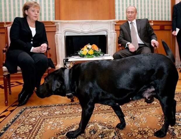 Путин Меркель и Конни