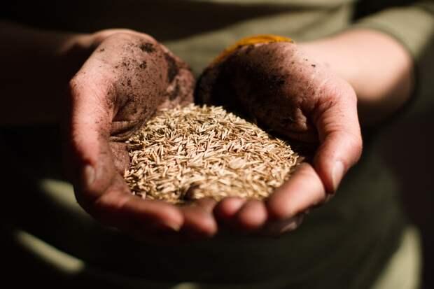 Меньше потребности: в Удмуртии за посевный сезон планируют собрать не более 450 тысяч тонн зерна