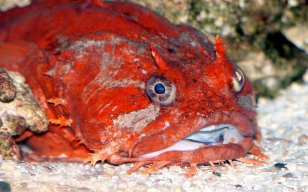 Страшные и ужасные глубоководные рыбы