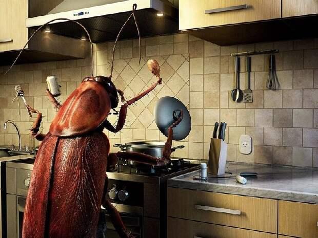 Картинки по запросу Вас замучили пауки, тараканы и другие насекомые в доме