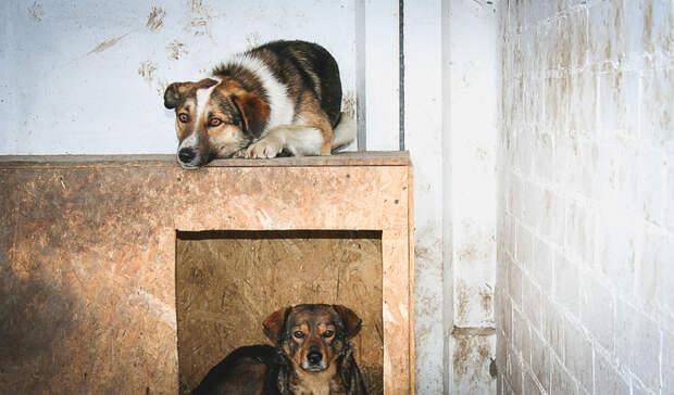 Только от жизни собачьей: как сократить число бездомных животных на улицах