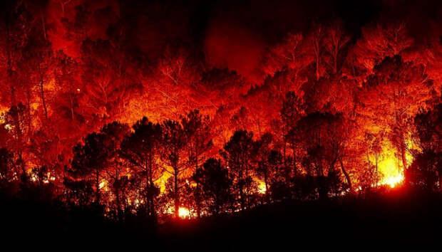 От огня в Сегежском районе спасли поселок и дачные кооперативы