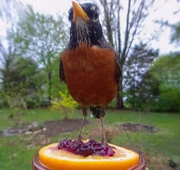Камера у кормушки сняла забавные кадры с птицами и зверятами