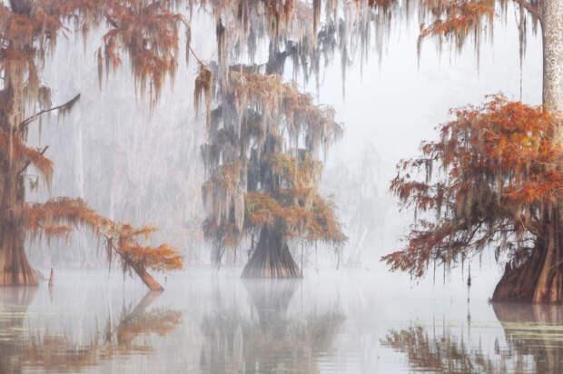 Водно-болотные угодия Луизианы