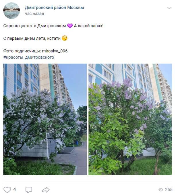 Фото дня: в Дмитровском расцвела сирень