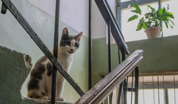 Новые соседи пробили потолок вдоме депутата изПетрозаводска