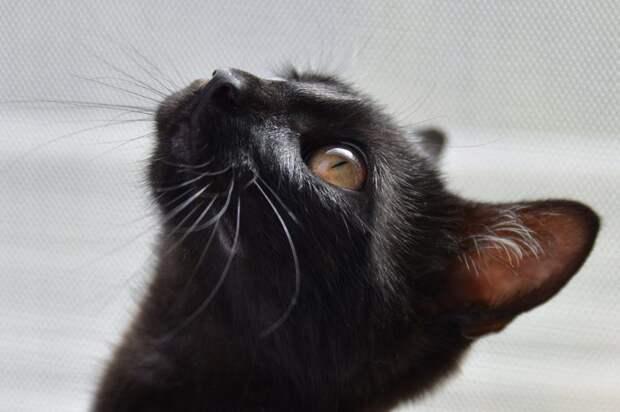 Поисково-спасательную операцию по спасению кота начали жители Сокола