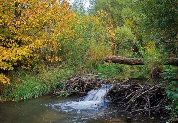 Плотина обеспечивает перепад в среднем до полуметра. Фото: Павел Греков