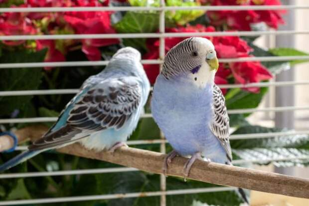 7 декоративных птичек, которые подойдут начинающим