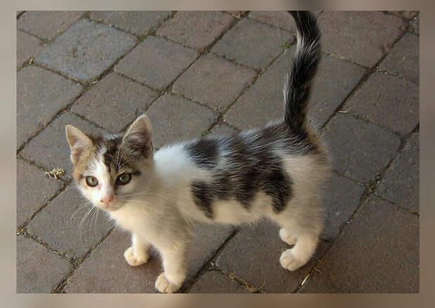 """""""Выкину его туда, откуда ты его принесла"""", - говорил 10 лет назад мой отец про котёнка, которого я принесла с улицы"""