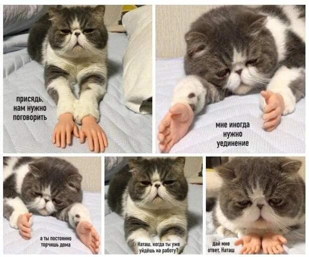 «Наташ, вставай! Мы уронили вообще все!»: на фоне последних событий в сети обрел популярность новый мем с котами