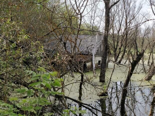 """Встретил болото """"человеческого"""" происхождения. Похоже, заболачивание вызвала плотина. А что, бывает, болота создают бобры, когда строят свои плотины. И какое тогда происхождение этого болота?"""